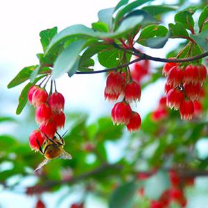 高山植物イメージ